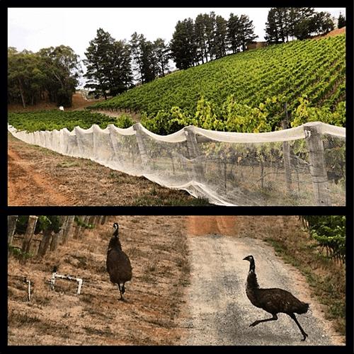 Henschke Emu fencing