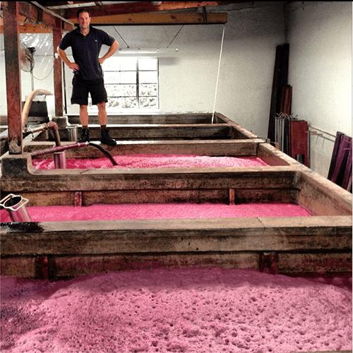 Henschke fermenting