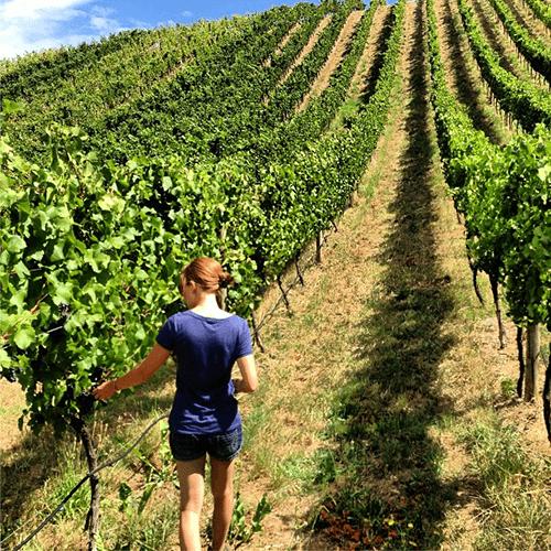 Henschke vineyards