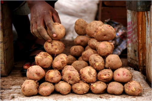 Close up potato land for sale, Uganda Africa by Sarit Saliman